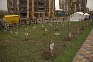 Застройщики и новоселы жилых комплексов посадили в Ростове тысячи деревьев