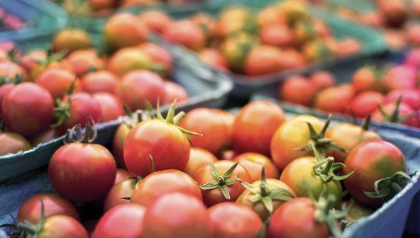 Завод по производству томатной пасты